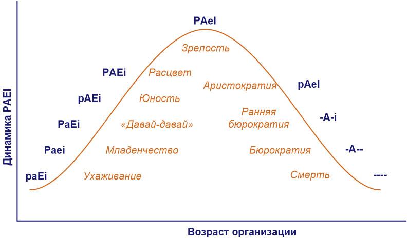 Определение стадии жизненного цикла организации